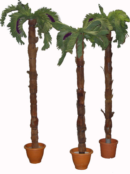 palmbomen_2005